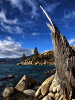 Ancient tree by MartinGollery
