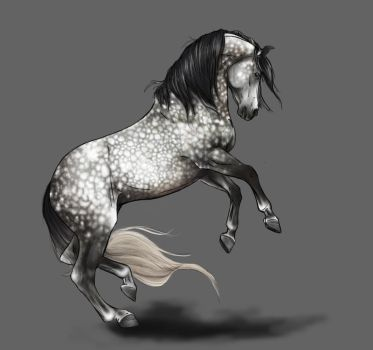 Grey Andalusian by Horseyperson