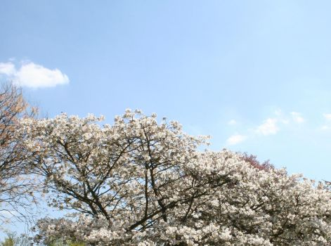 Blossom2 by MarkTBSc