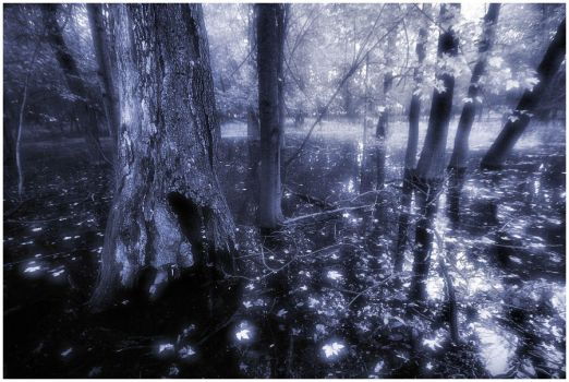 Haunted Swamp II by aquapell