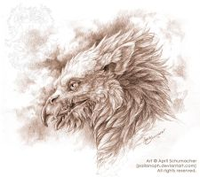 Gryphon Head Study by pallanoph
