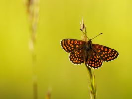 butterfly wallpaper by mescamesh