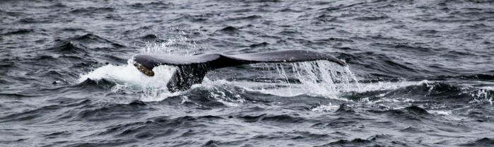 Whale tail by capougirl
