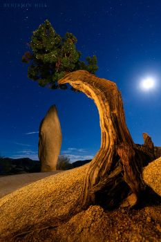 Heart of Joshua Tree by benkhill