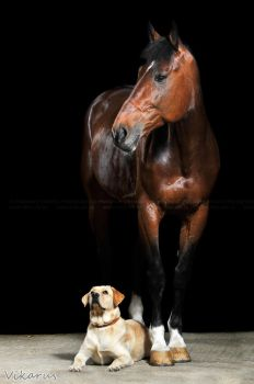 Horse and dog by Vikarus