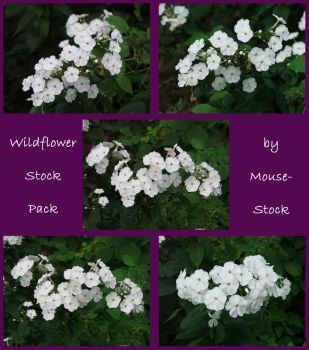 Wildflower Stock Pack 1 by Mouse-Stock