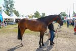 Conformation - Athletic Warmblood by LuDa-Stock