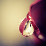 Rose drop...... by addy-ack