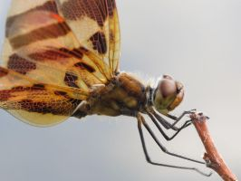 Halloween Pennant 5a by Windthin