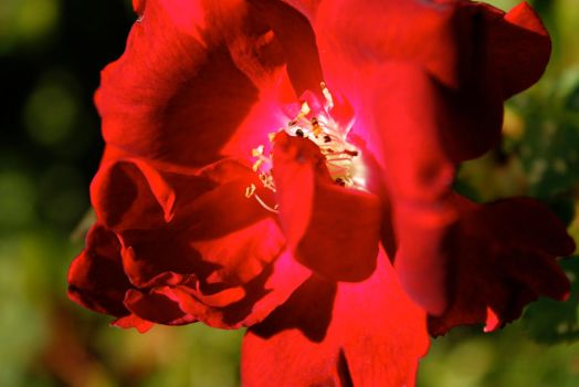 Red My Flowers by eannez