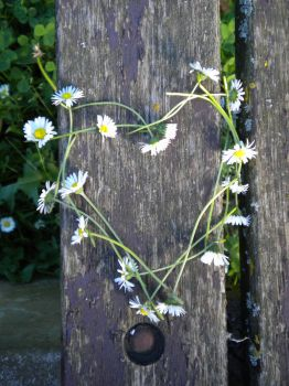 Daisy Chain Love by qwends