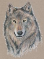 Wolf portrait by echoskybound