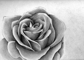 charcoal rose by choopocobra